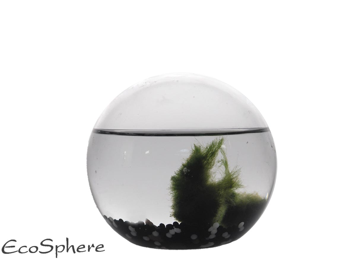 Ecosphera Sphere Jungle - 13 Cm