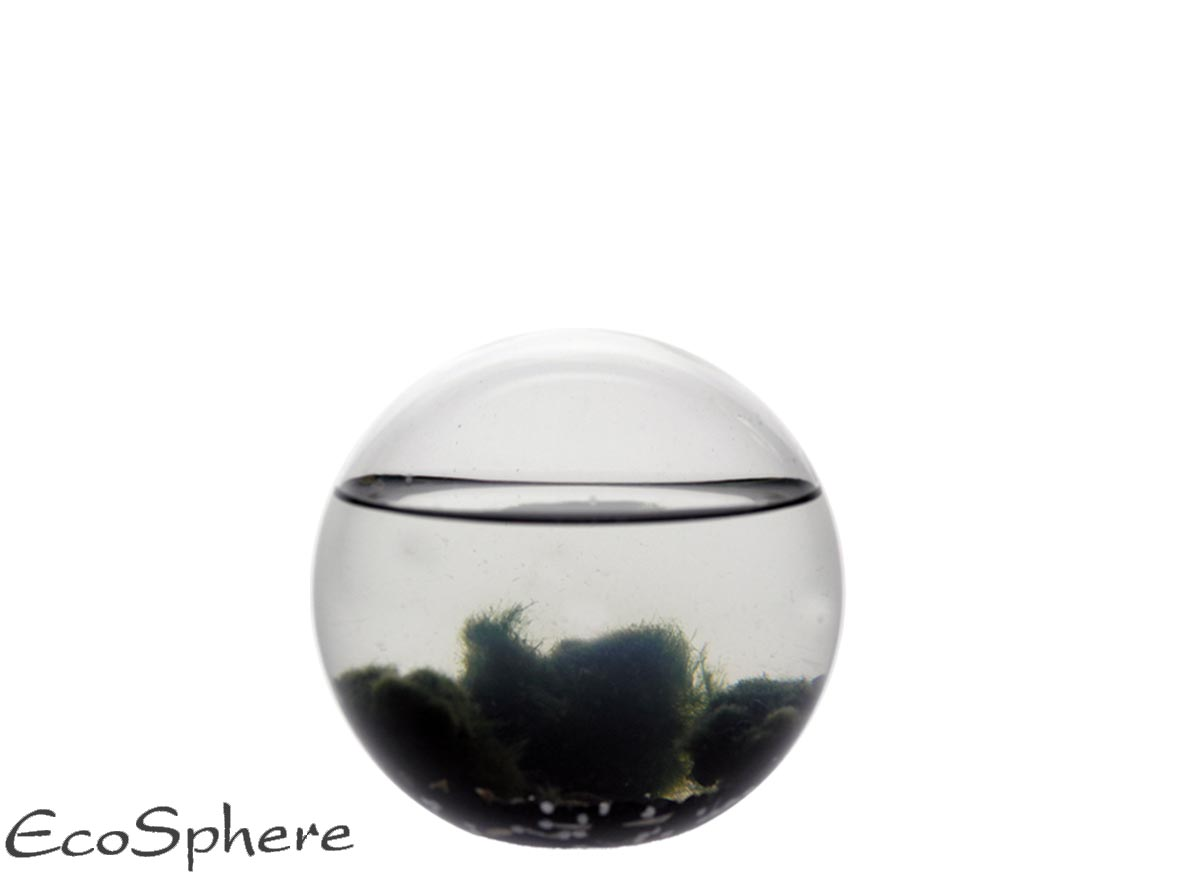 Ecosphera Sphere Jungle - 10 Cm
